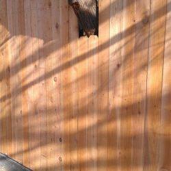 Side by side cedar fence with tree cutout